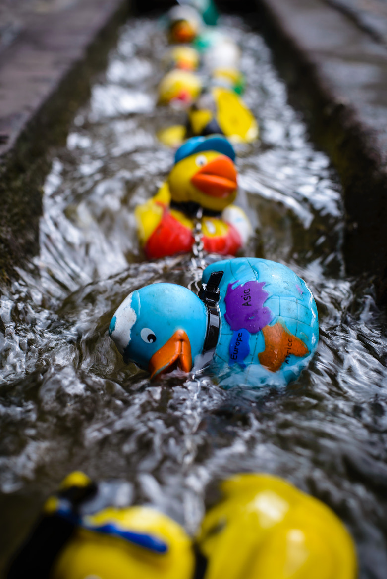 Photograph Rubber duck turning turtle by Manuel Schmiederer on 500px