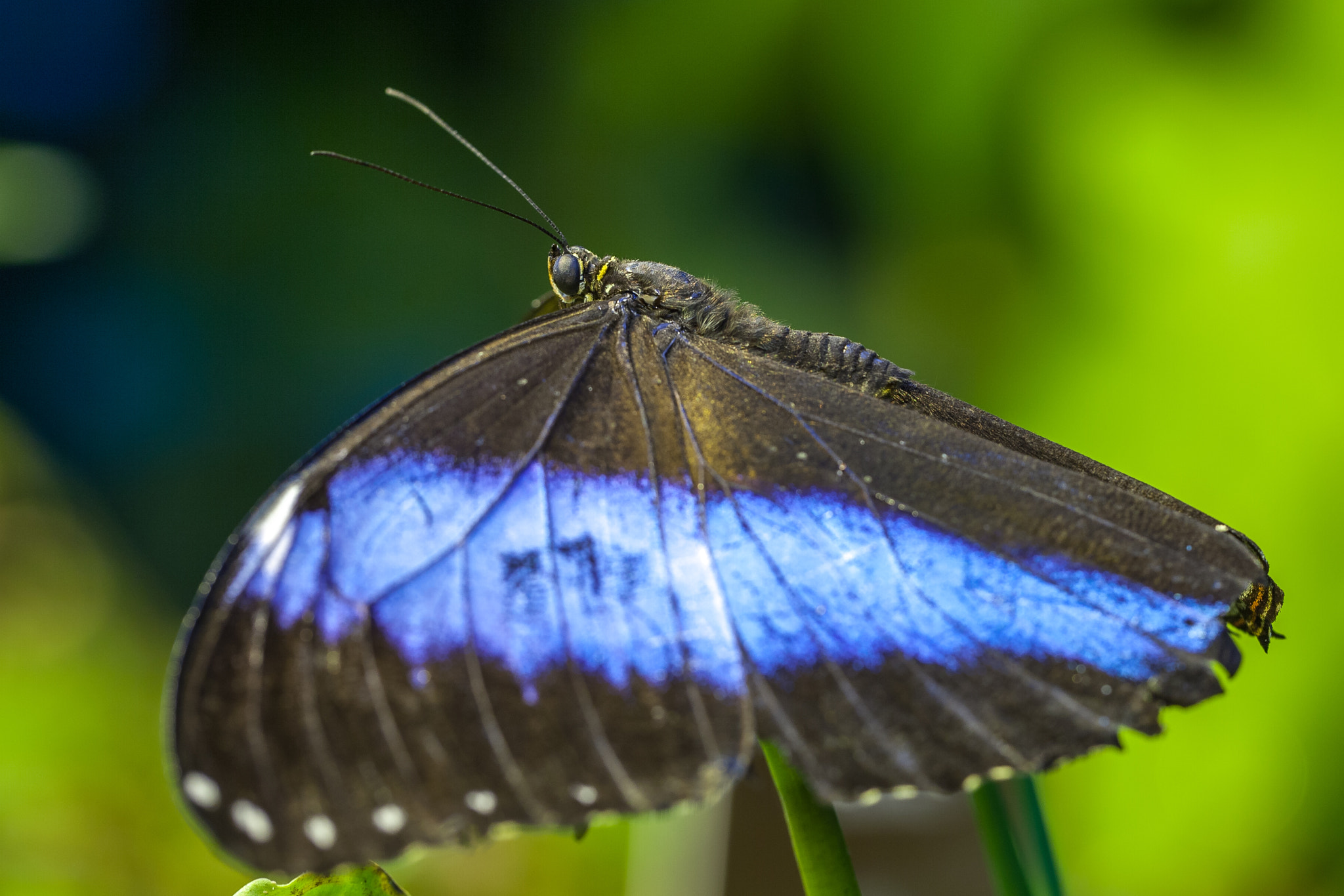 Photograph Blue Beauty by Tobias Kuhl on 500px
