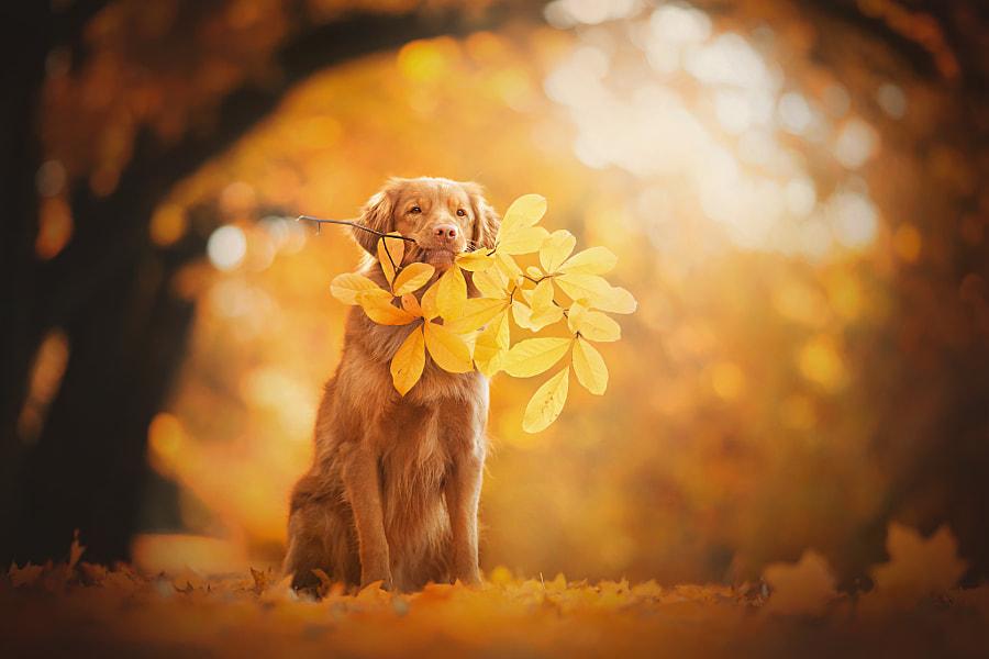 Autumn Monochrome by Alicja Zmysłowska on 500px.com