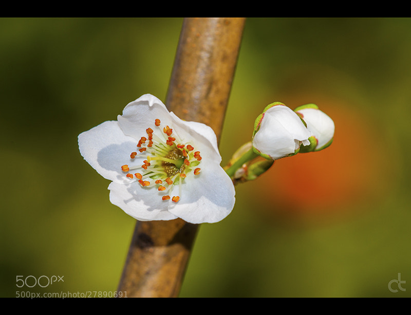 Photograph Spring 2 by Can Tunçer on 500px