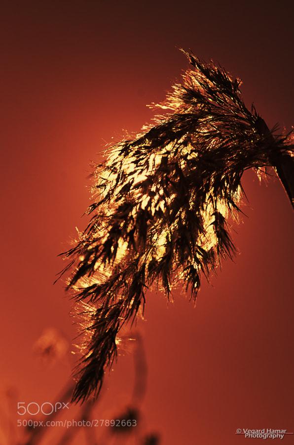 Photograph Into the sun (IR) by Vegard Hamar on 500px