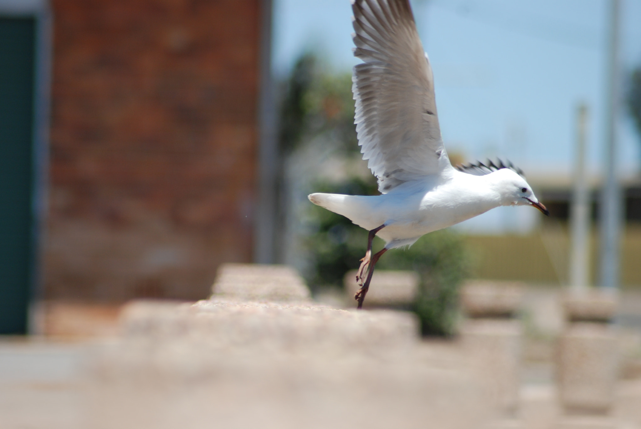Photograph Seagull in Flight by Robyn Baker on 500px