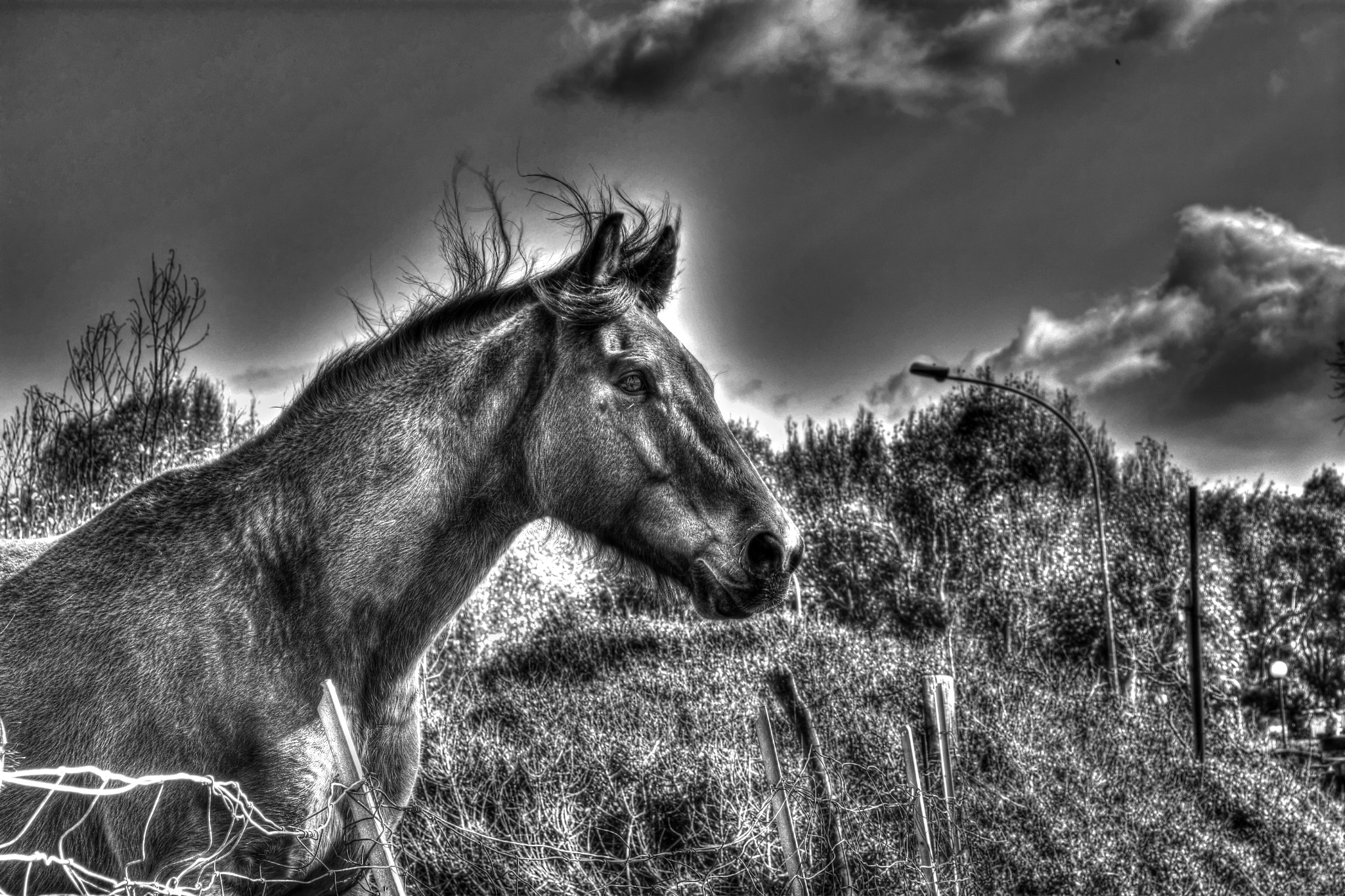 Photograph Cavallo HDR B\N by Marco Melis on 500px