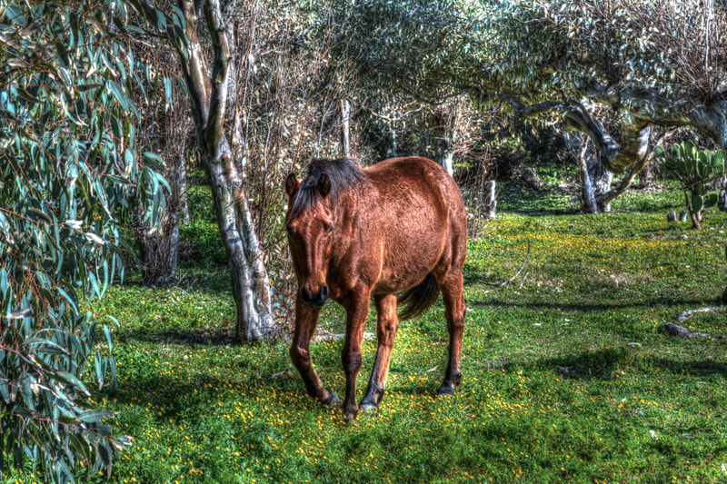 Photograph Nature Horse (HDR) by Marco Melis on 500px