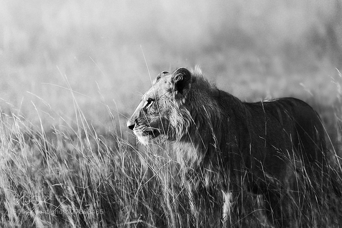 Photograph In the Bush by Sharon Smith on 500px