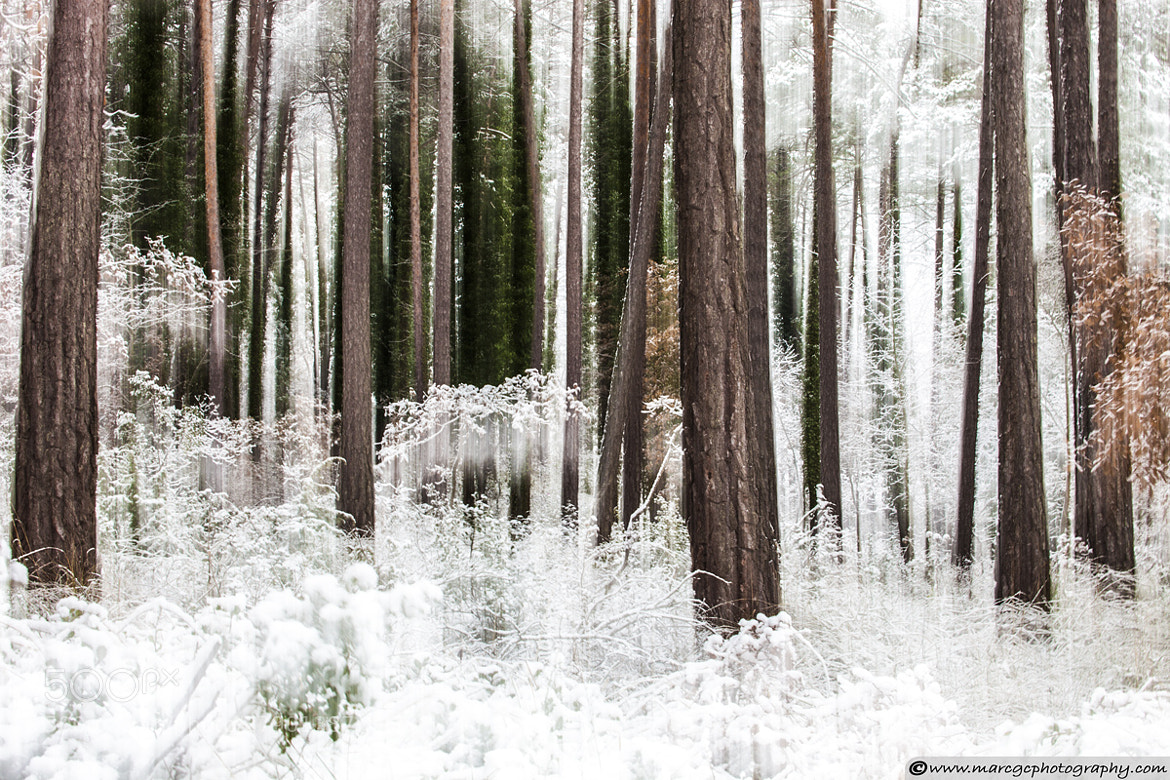 Photograph Ethereal Forest by Marc Garrido on 500px