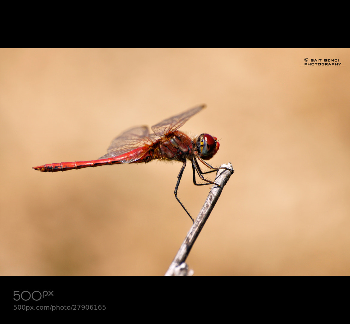 Photograph Dragonfly by Sait Gemci on 500px