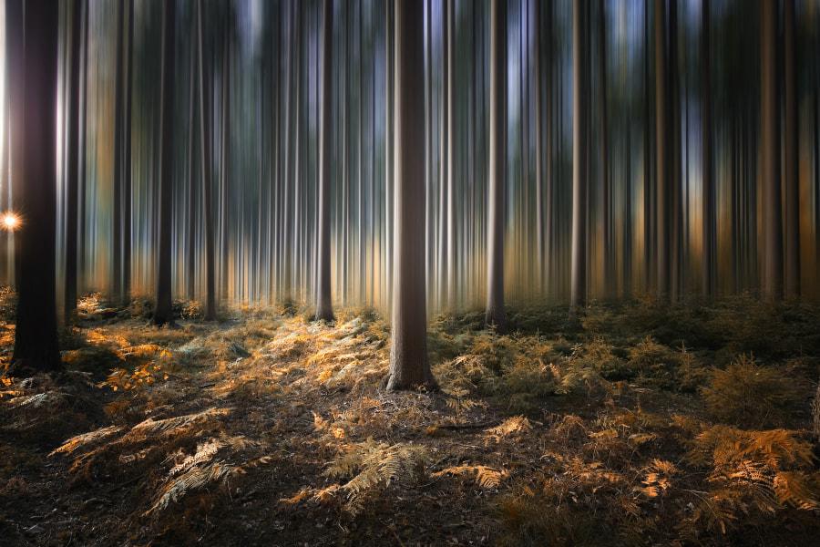 Magic Trees, автор — Carsten Meyerdierks на 500px.com