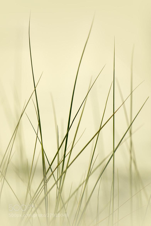 Photograph S I L E N C E by Piero Imperiale on 500px