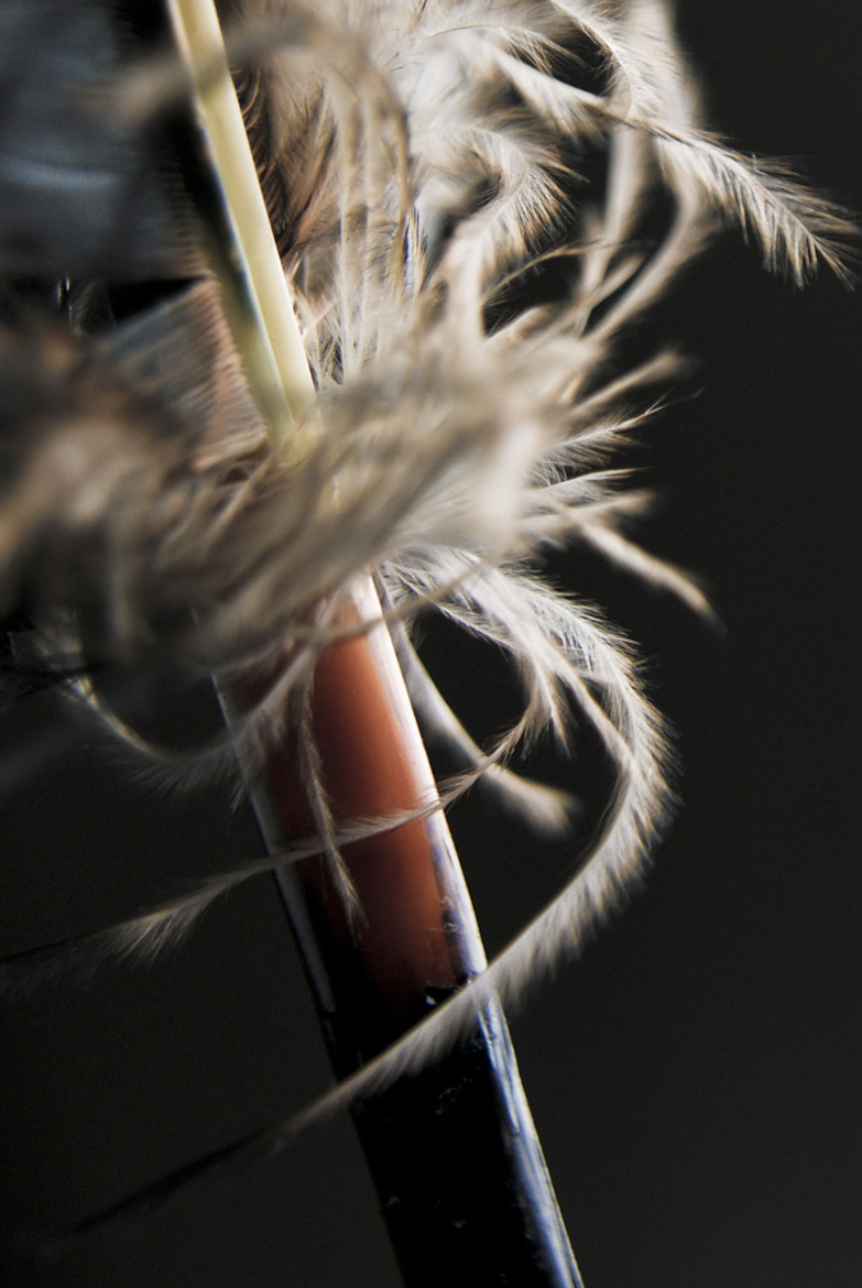 Photograph feather by Nina  on 500px