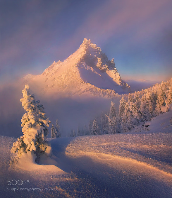 Photograph Clearing by Marc  Adamus on 500px