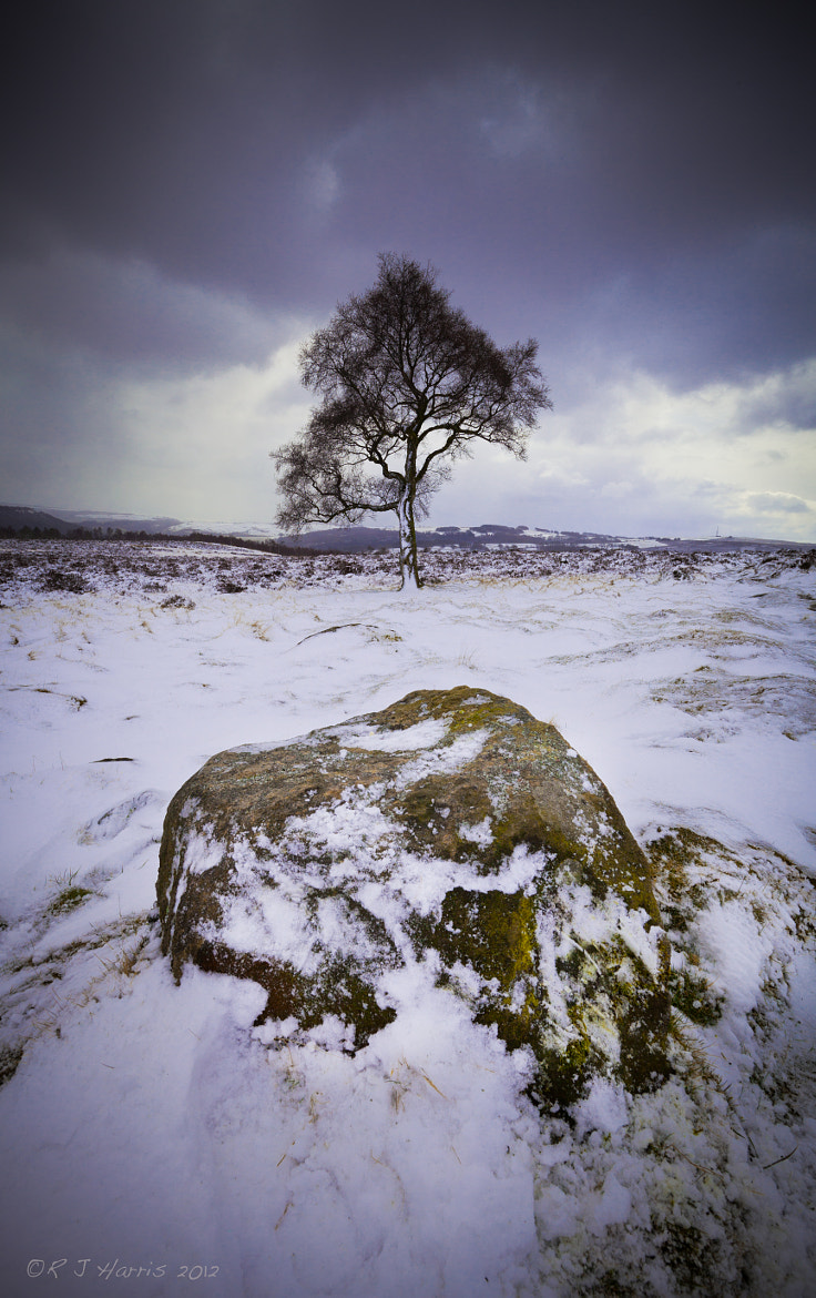 Photograph Lone Tree by Rob Harris on 500px
