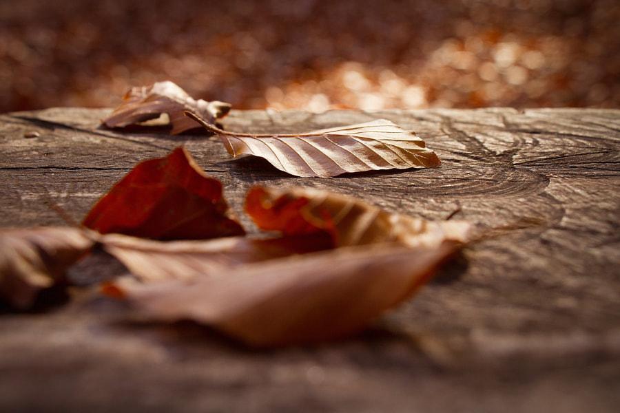 Autumn still life 1 by Yaroslav Baran on 500px.com