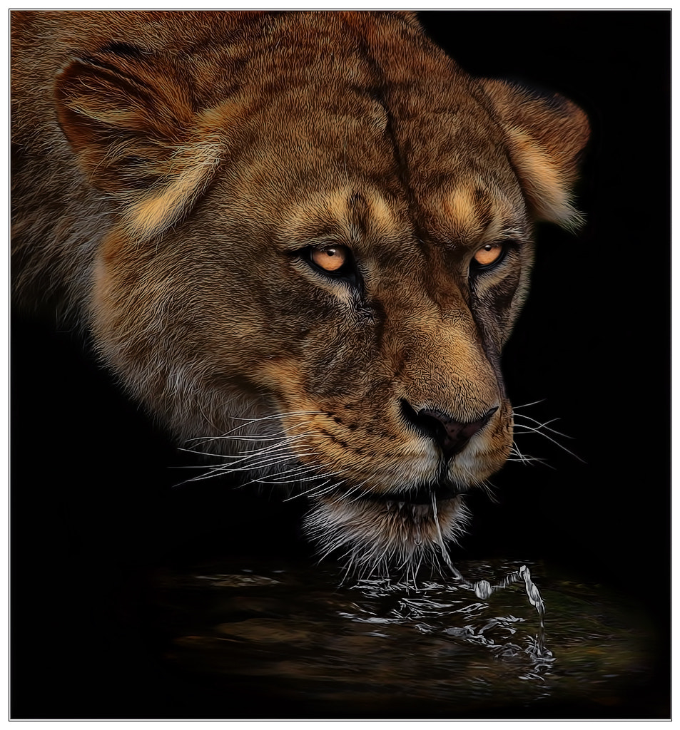 Photograph At night at the watering hole by Klaus Wiese on 500px