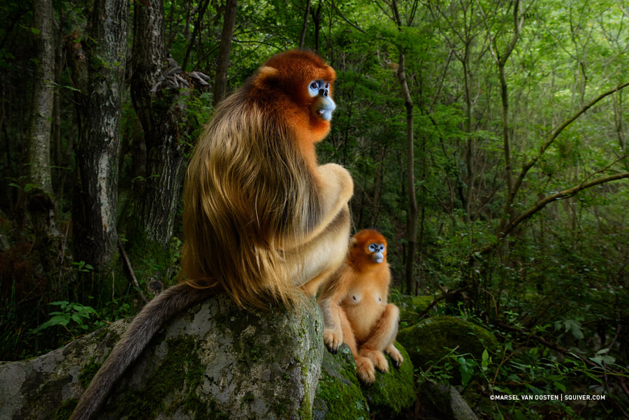 Wildlife Photographer Of The Year 2018 by Marsel van Oosten on 500px.com