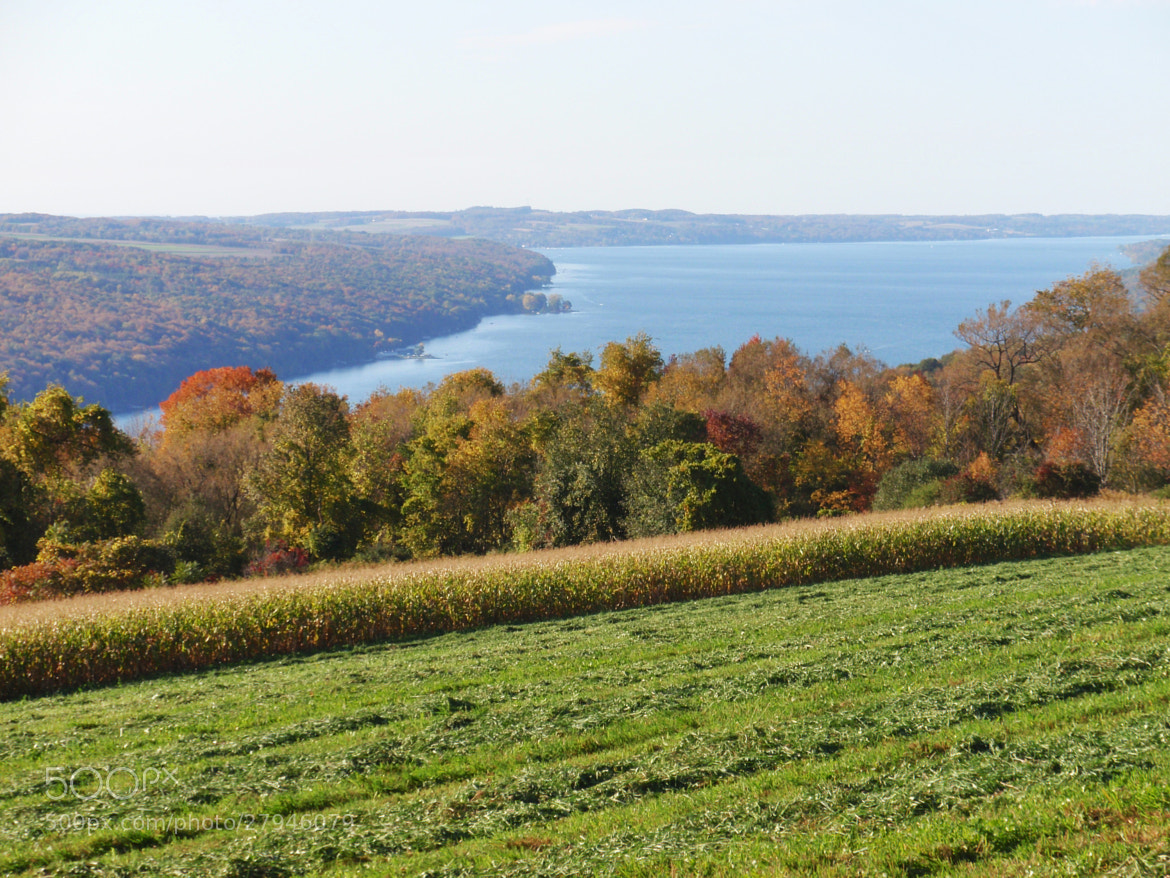 Photograph A Hedgerow Above Skaneateles Lake by Michael Card on 500px