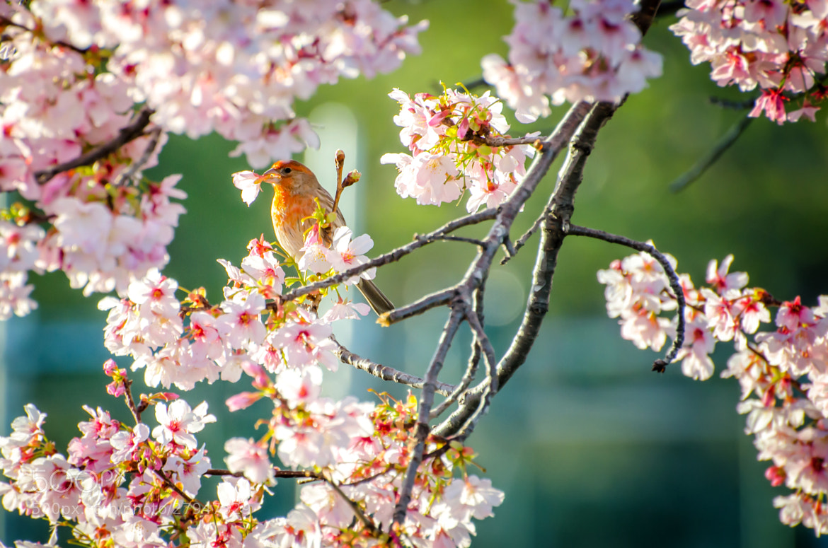 Photograph A bird in flowers by Jerry Jang on 500px