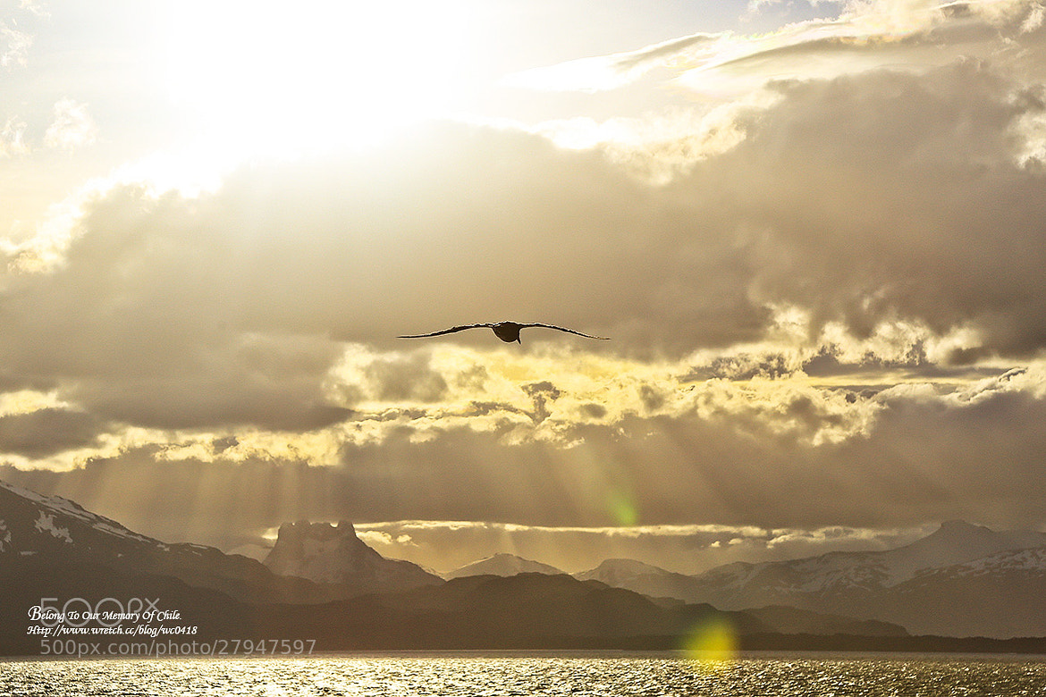 Photograph Backlight flight by 憲龍 周 on 500px