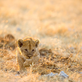 Early beginnings by Bridgena Barnard (Bridgena_Barnard)) on 500px.com