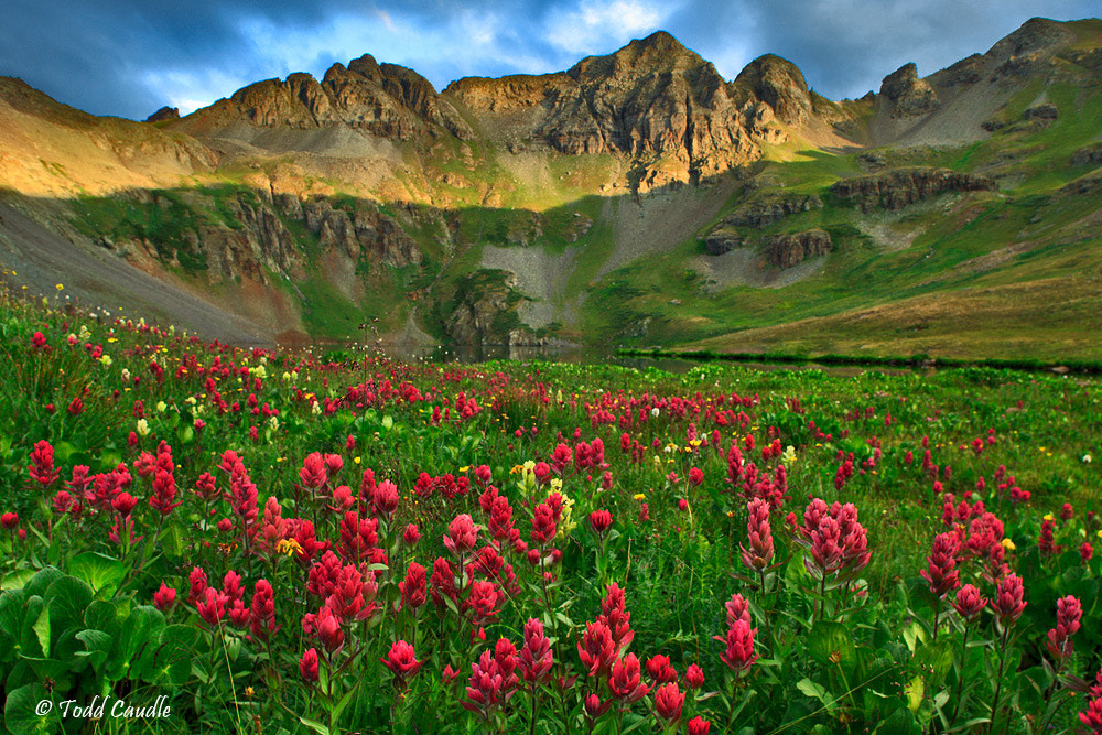 Photograph Indian Paintbrush at Clear Lake by Todd Caudle on 500px