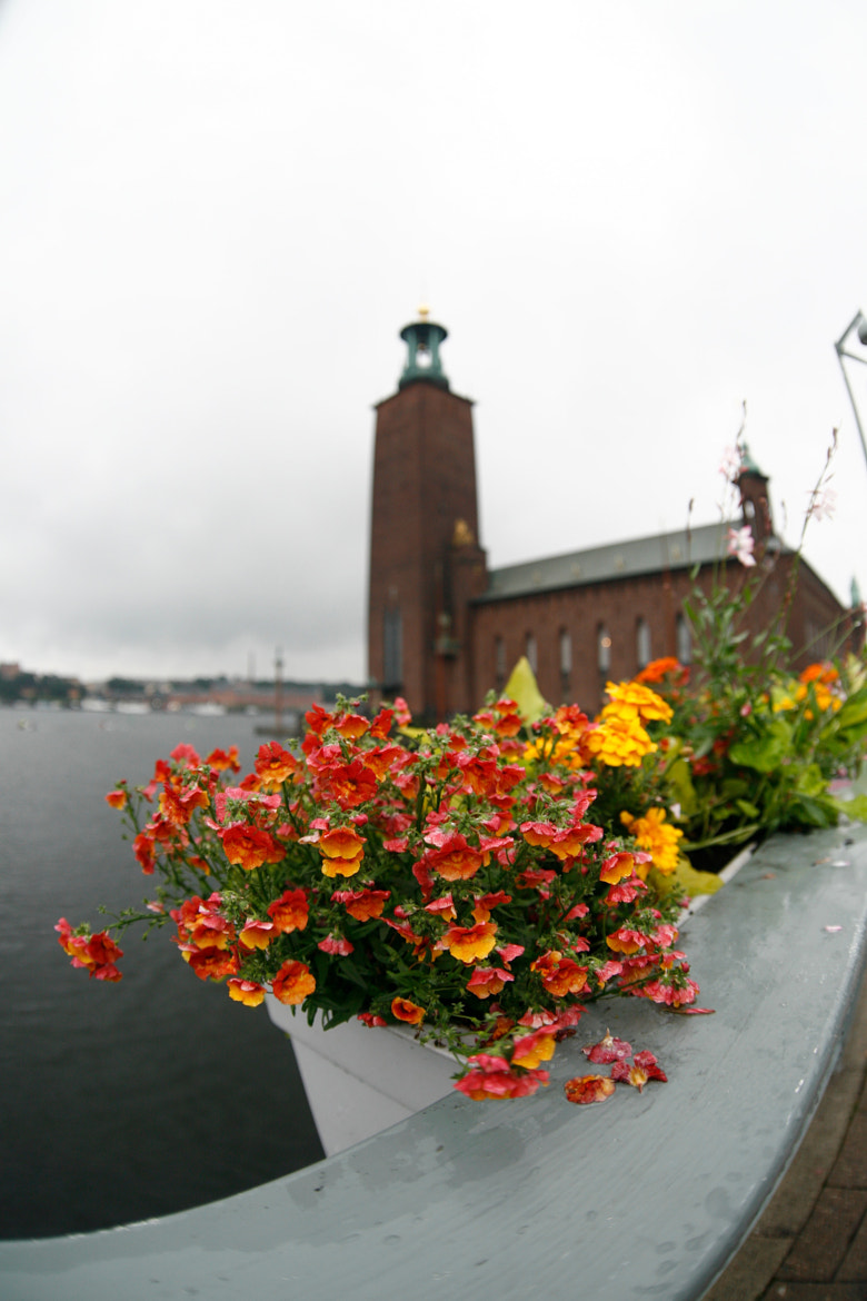 Photograph Flowers of stockholm by nike_mayfly on 500px