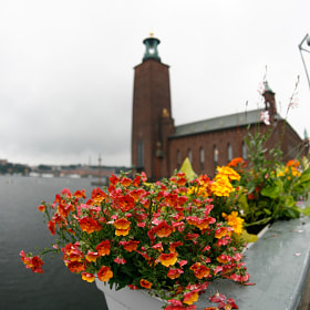 Flowers of stockholm by nike_mayfly ) on 500px.com
