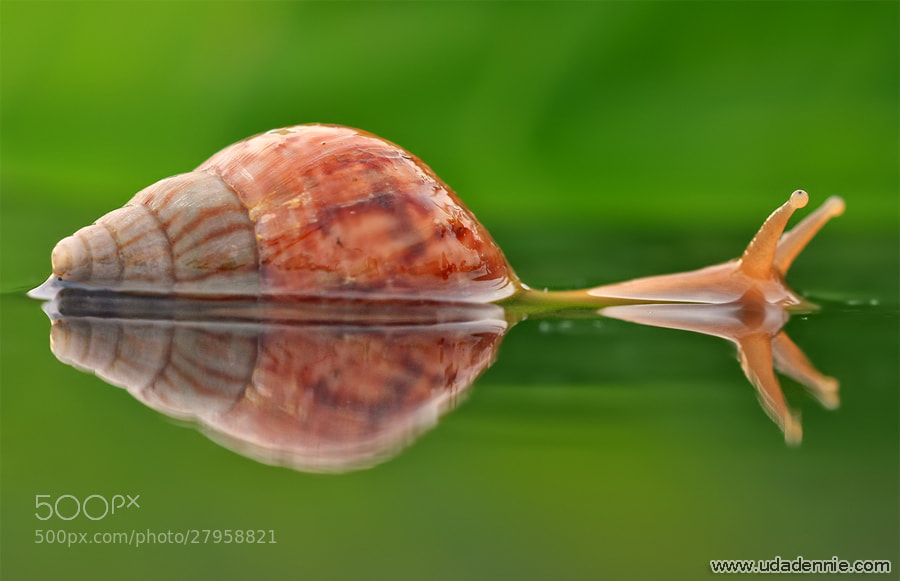 Photograph Nature Reflection by Uda Dennie on 500px