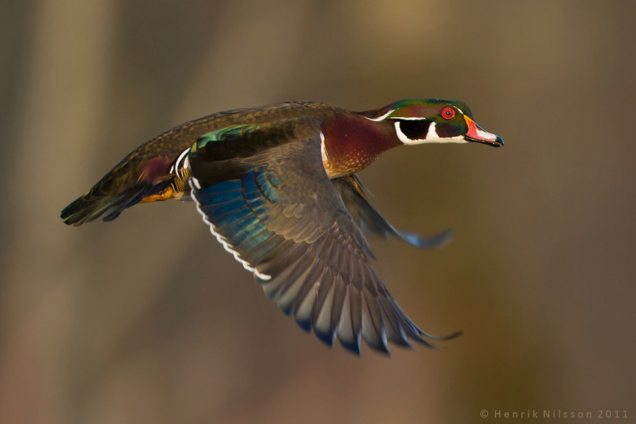 Photograph Drake Woodie by Henrik Nilsson on 500px