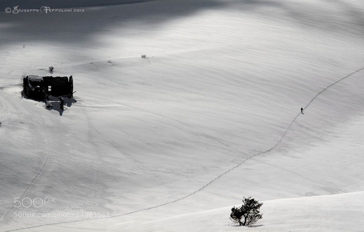 Photograph The solitary by Giuseppe  Peppoloni on 500px
