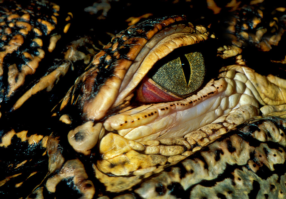 Photograph Crock's Eye by Harry  Eggens on 500px