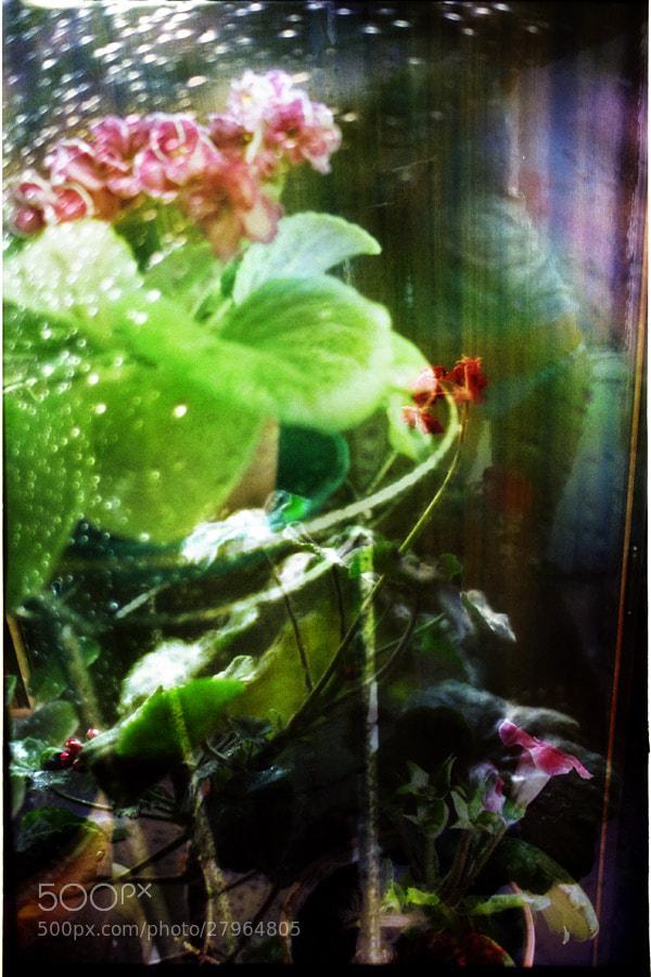 Photograph Untitled by Vika Panasenko on 500px
