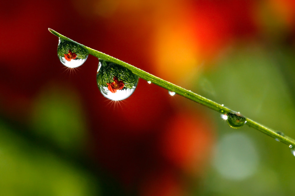 Photograph The World in a Drop by Roeselien Raimond on 500px