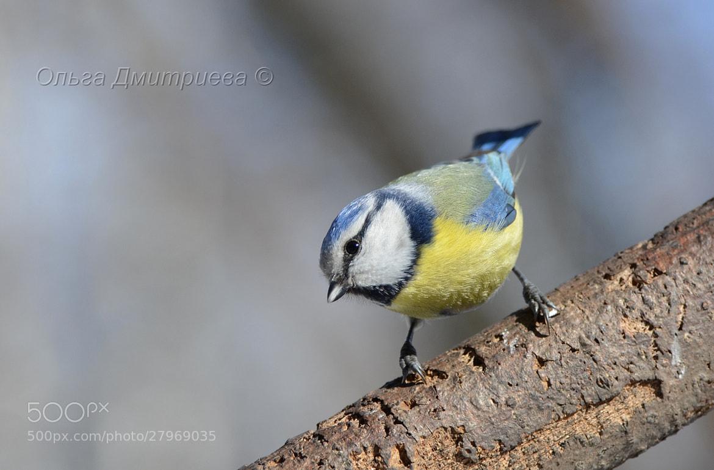 Photograph Curious bird. by Olga Dmitrieva on 500px
