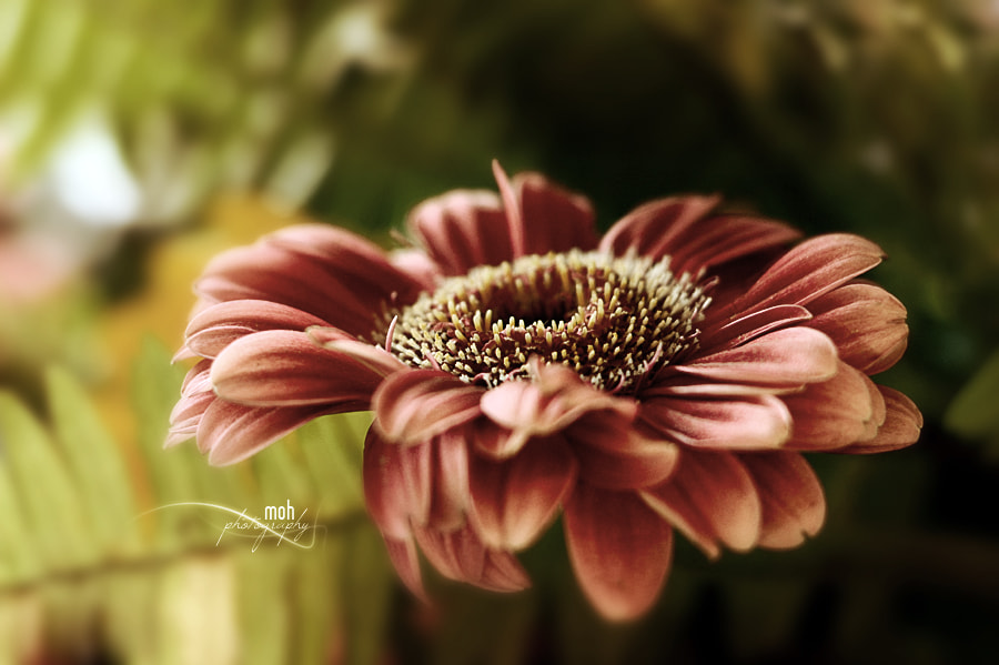 Photograph Floratic' Art II by Mohan Duwal on 500px