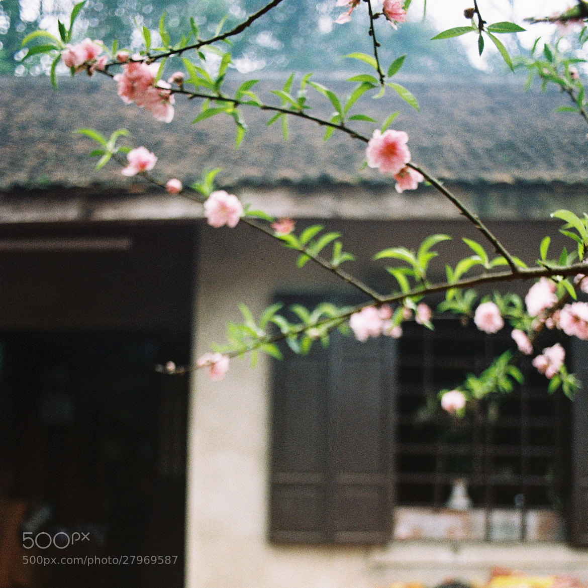 Photograph Untitled by Tran the gioi on 500px