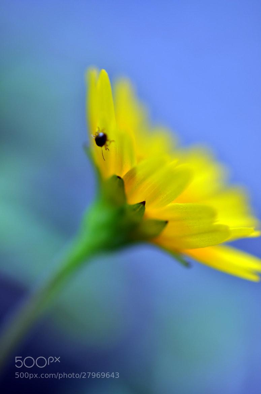 Photograph ladybug by Jenny Rillo on 500px