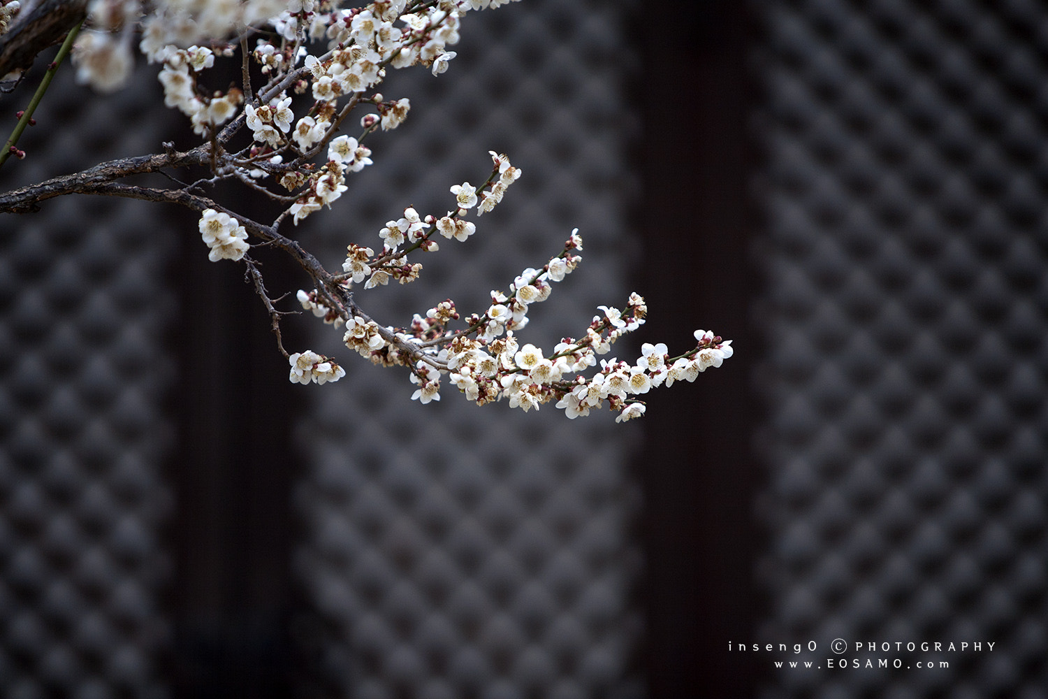 Photograph herald of spring by chan-wook Kim on 500px