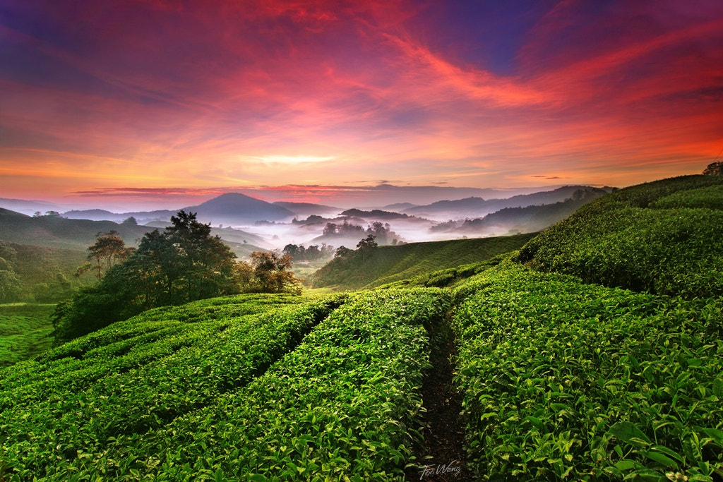 Photograph Refreshing Morning by Foo Weng on 500px