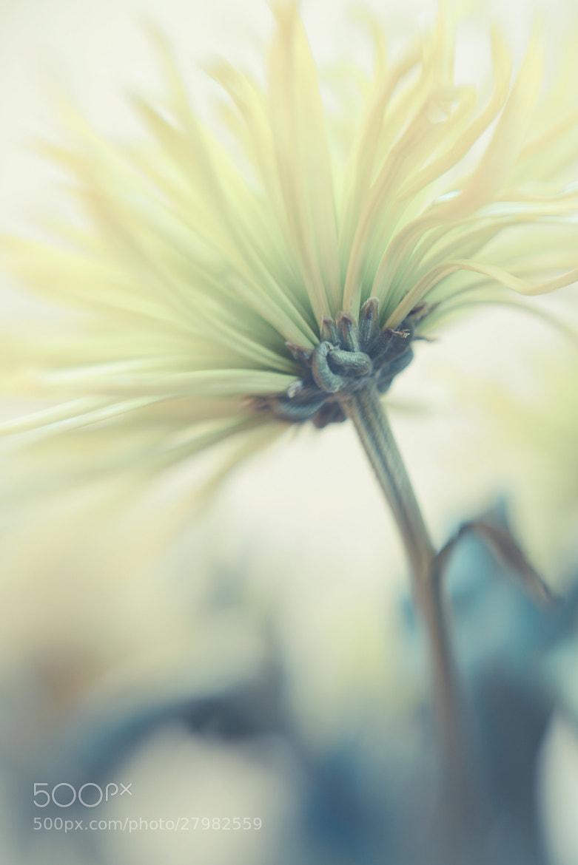 Photograph Lemon by Angela Fanton on 500px
