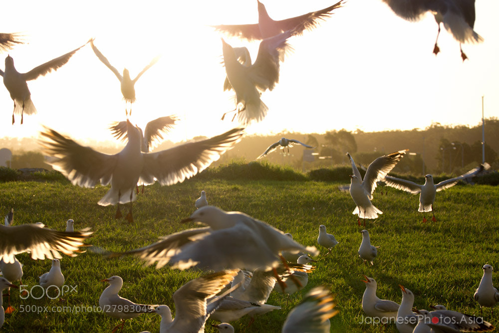 Photograph Seagull frenzy by Andrew Blyth on 500px
