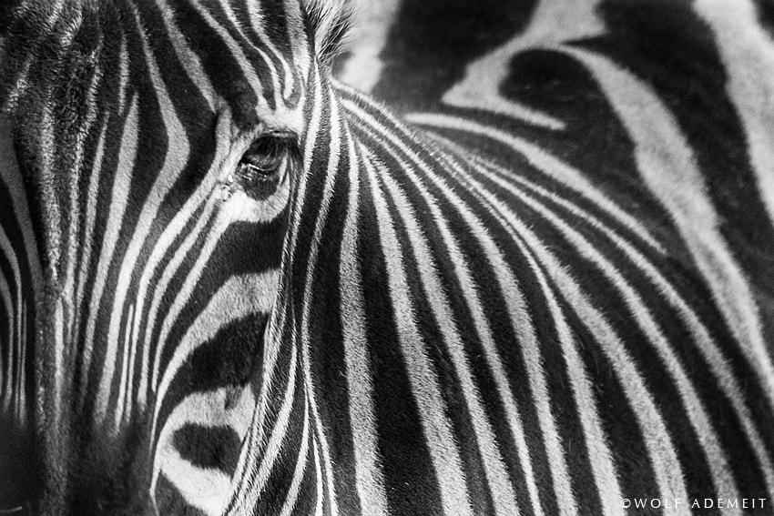 Photograph stripes by Wolf Ademeit on 500px