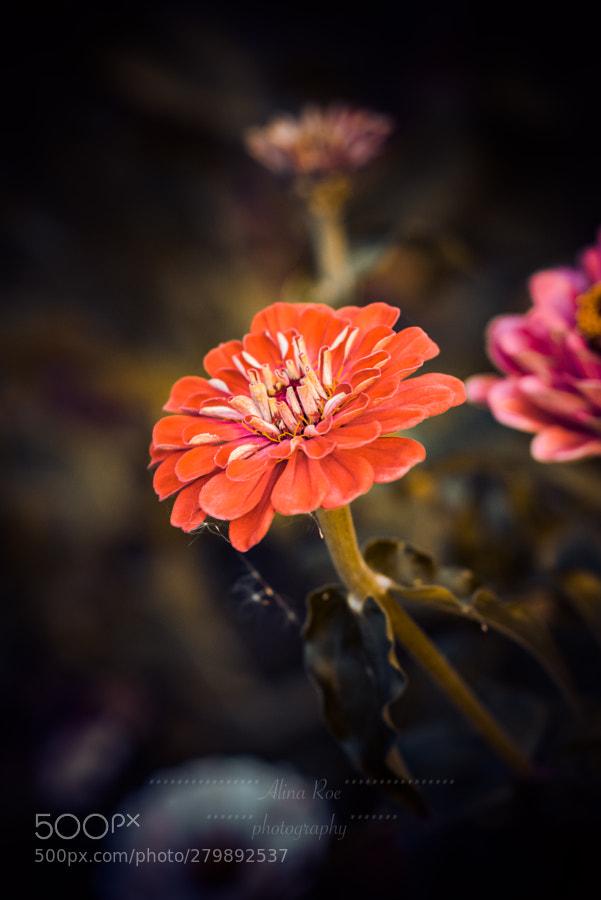 Alina Roe (AlinaRoePhotography) Photos / 500px