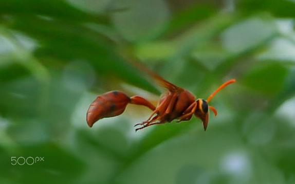 Bug on the air!