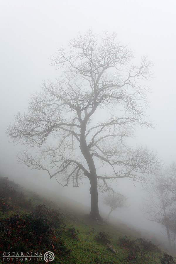 Photograph - Misty tree - by Oscar  Peña on 500px