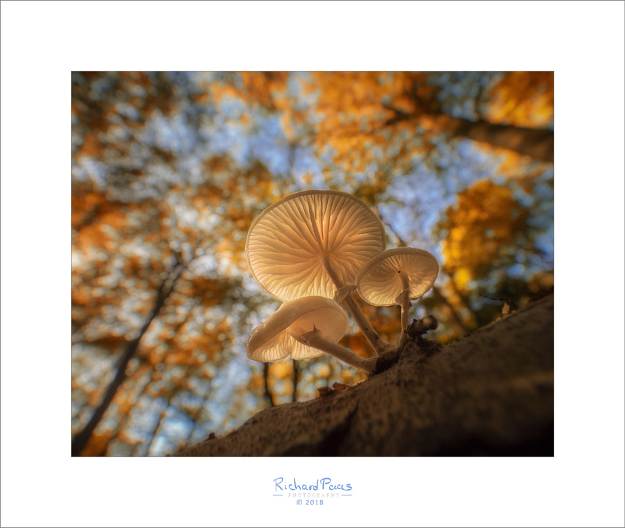 Porcelain Fungus by Richard Paas on 500px.com