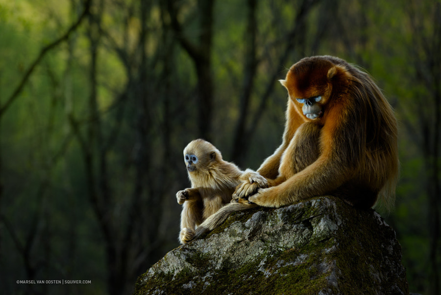 Protection by Marsel van Oosten on 500px.com