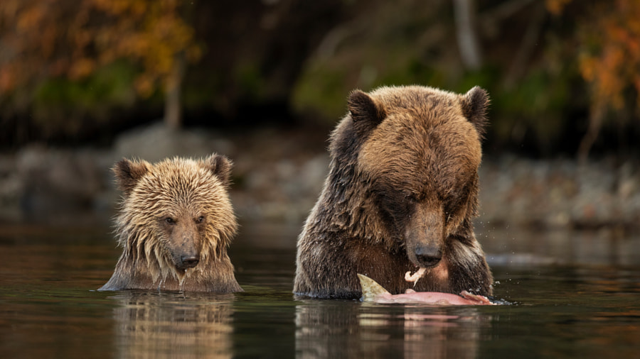 Looking for a Bite by Henrik Nilsson on 500px.com