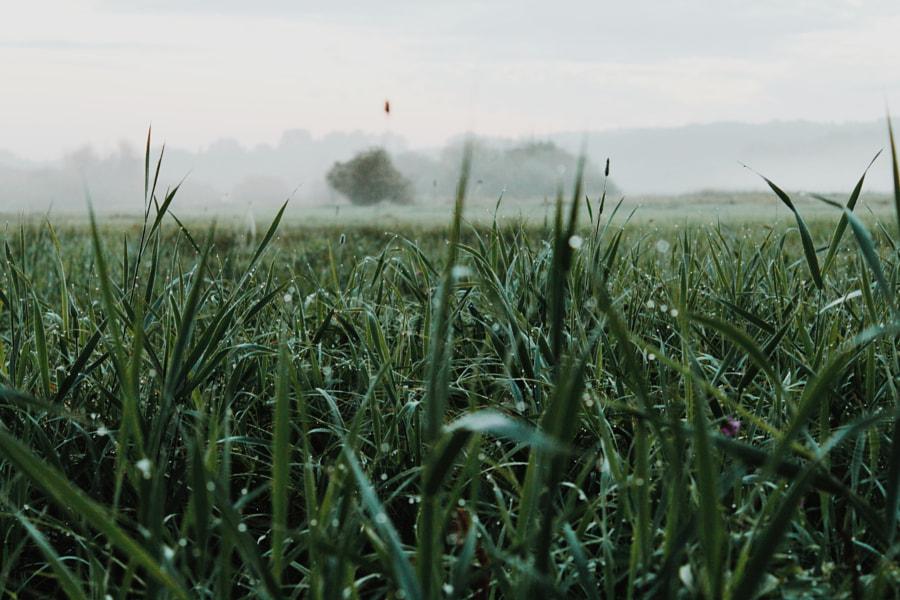 Grassland, автор — Artur Sagan на 500px.com