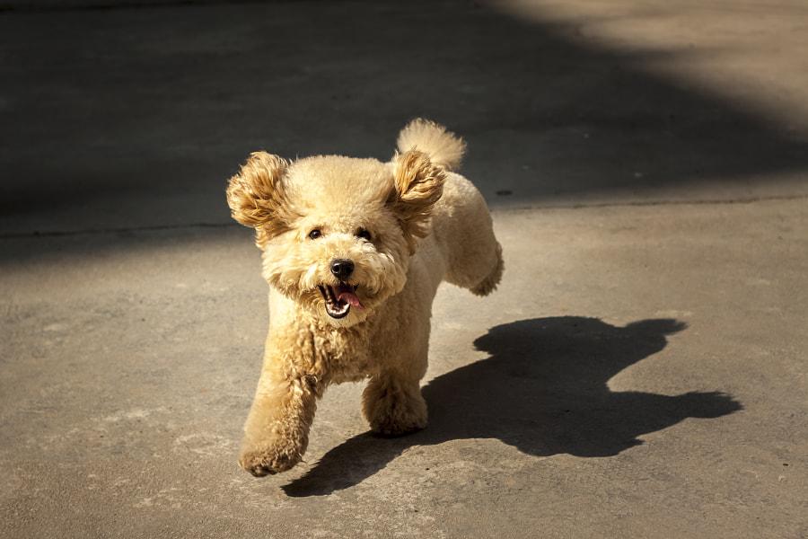 running dog, автор — Shi Rou на 500px.com