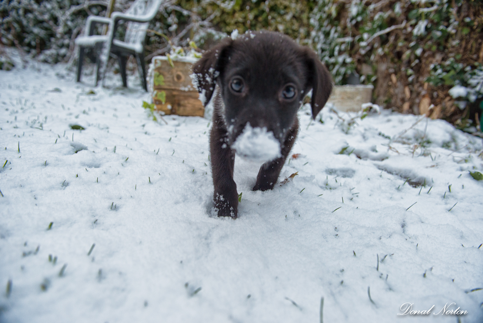 Photograph Puppie's first snow by Donal Norton on 500px
